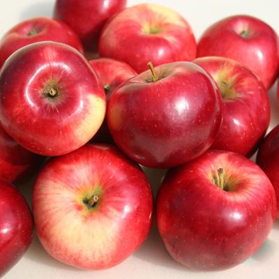 Яблоня Веньяминовское купить.