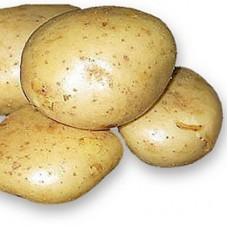 Семенной картофель Белоснежка