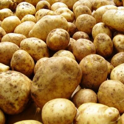 Купить Семенной картофель Дубрава