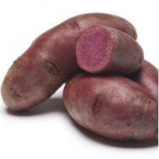 Семенной картофель Фиолетовый