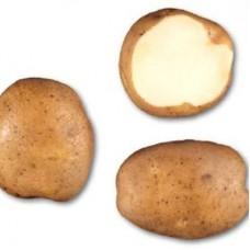 Семенной картофель Кураж