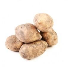 Семенной картофель Лорх