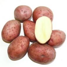 Семенной картофель Любава