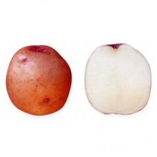 Семенной картофель Малиновка