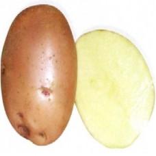 Семенной картофель Накра