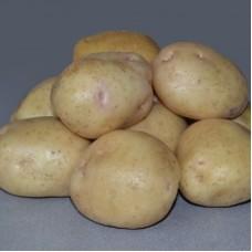 Семенной картофель Невский