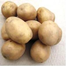 Семенной картофель Юбилей Жукова