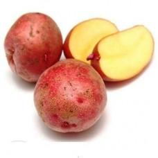 Семенной картофель Юбиляр