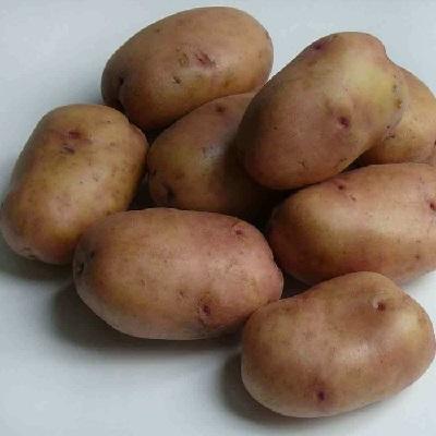 Купить Семенной картофель Жуковский ранний