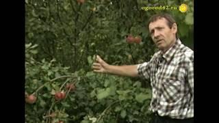 Уэлси в Сибири