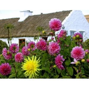 Цветы - радость нашего сада