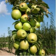 Яблоня колонновидная Чебурашка