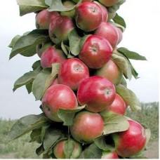 Яблоня колонновидная Валюта