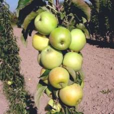 Яблоня колонновидная Каскад