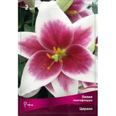 Лилия лонгифлорум (длинноцветковая) Цирано