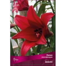 Лилия лонгифлорум (длинноцветковая) Дивайн