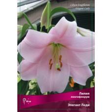 Лилия лонгифлорум (длинноцветковая) Элегант Леди