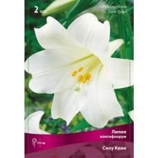 Лилия лонгифлорум (длинноцветковая) Сноу Квин