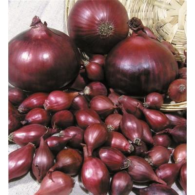 Купить лук севок Ред Барон