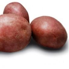 Семенной картофель Альвара