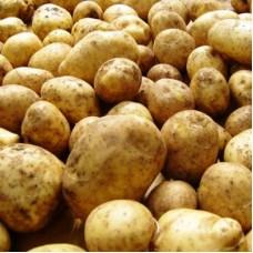 Семенной картофель Дубрава