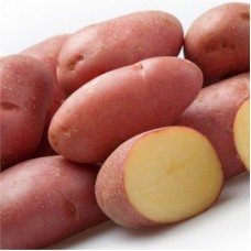 Семенной картофель Фрегат