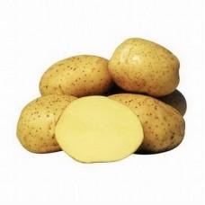 Семенной картофель Креница