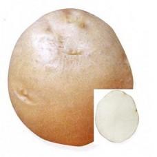 Семенной картофель Никулинский