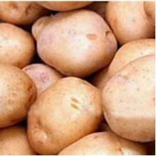 Семенной картофель Синеглазка