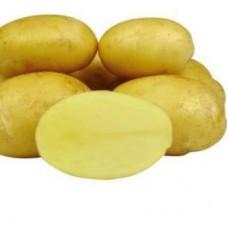 Семенной картофель Уладар