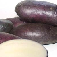 Семенной картофель Василек