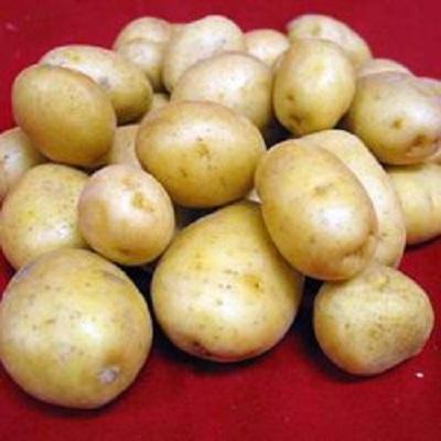 Купить Семенной картофель Великан