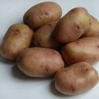 Семенной картофель Жуковский ранний