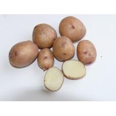 Семенной картофель Аврора