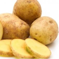Семенной картофель Гулливер