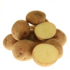 Семенной картофель Красавчик