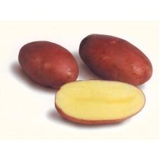 Семенной картофель Лабелла