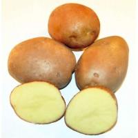 Семенной картофель Пикассо