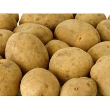 Семенной картофель Скарб