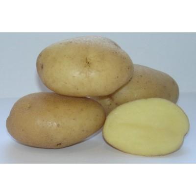 Семенной картофель Вымпел