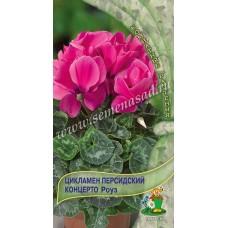 Цикламен персидский Концерто Роуз