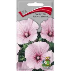 Лаватера Красотка розовая