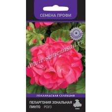 Пеларгония зональная Пинто Роуз