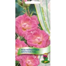 Роза полиантовая Ангельская роза
