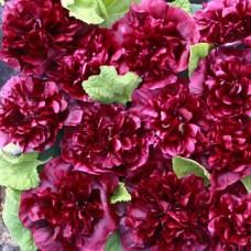 Шток-роза Блекберри