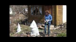 Ель коника после зимы. Сайт sadovymir.ru