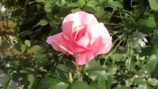Элизабет куин роза июнь 2014